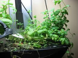aerogarden weed harvest. aerogarden weed harvest until my looked with aero garden idea a