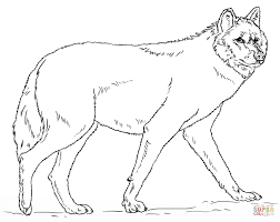 Realistic Grey Wolf Coloring Page Free Printable Coloring Pages