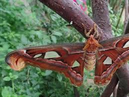big pictures of butterflies. Perfect Butterflies Butterfly Park Of Benalmadena Big For Big Pictures Of Butterflies T