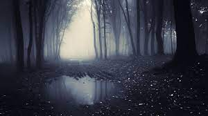 Dark Forest 4K Wallpapers - Top Free ...