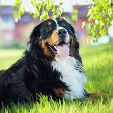 Ebay drei original verschlossene tüten wellness core a 1,5kg für kleine hunderassen (bis 10kg) in der. Hunderassen Und Deren Charaktereigenschaften