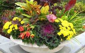 Planting Containers For Late Summer Into Autumn  Garden ForeplayContainer Garden Ideas For Fall