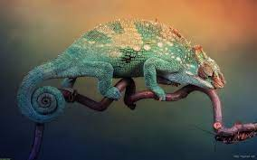 Cute Chameleon Wallpaper Desktop ...