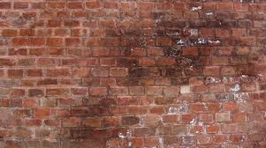 tips for removing mould from walls with hg