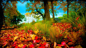 HD 3D Nature Wallpapers 1080p ...