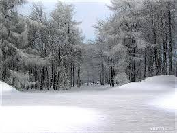 Animated Snow Scenes 3576 Free Animated Snow Scene Wallpaper