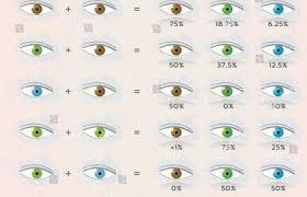 76 Judicious Hair Color Prediction Chart