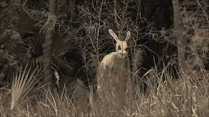 real sightings of the easter bunny.  Bunny Easter Bunny Sighting For Real Sightings Of The N