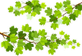 tree branch with leaves vector. green maple leaf branch vector material tree with leaves v