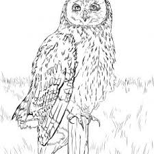Small Picture Snowy Owl Coloring Page Snowy Pages X adult