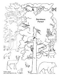 Forest Animal Coloring Page Deciduous Forest With Animals Coloring Page