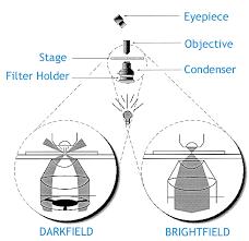 Darkfield Microscopy