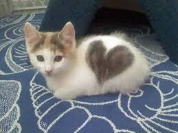 Résultat de recherche d'images pour 'chaton'