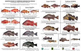 California Rockfish Chart Fish Id Recfin