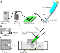 Electroporation Of Adherent Cells With Low Sample Volumes On A