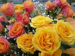 Bildergebnis für beautiful roses yellow pink