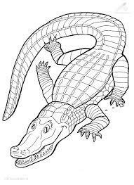 1001 Kleurplaten Dieren Krokodil Kleurplaat Grote Krokodil
