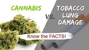 Cigarettes Vs Weed Chart Cannabis Vs Tobacco Lung Damage Know The Facts