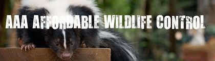 skunk removal cost. Delighful Skunk 295 Wildlife Control  Affordable LowCost Removal Toronto AAA  Service And Skunk Cost