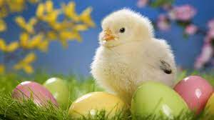 Baby Chicks Easter Wallpapers ...