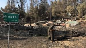 Will More Logging Save Western Forests From Wildfires Npr