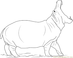 Small Picture Angry Hippopotamus Coloring Page Free Hippopotamus Coloring