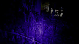Finding Blood With Uv Light Find Lost Hunting Arrows With A Ultraviolet Light
