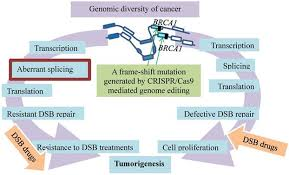 Genome Editing Break Breast Cancer Addiction By Crispr Cas9 Genome Editing