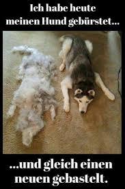 Oh Gott Welcher Hundehalter Kennt Das Nicht Aber Wer Macht Das