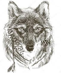 Vlk Vlk Indický Bojovník Vlk Skica Vlk Indický Ručně Tažené