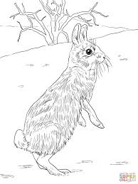 Eastern Bluebird Coloring Page In Neat Idaho Bird Coloring Page