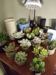 Succulent Grow Light Setup My Current Setup I Just Got The Grow Light Tonight Im Not