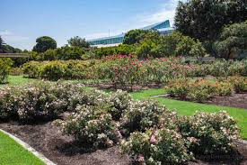 exposition park rose garden facing south