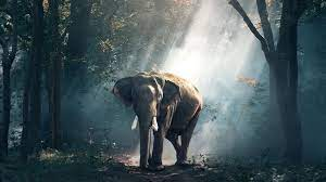 Elephant Laptop Wallpapers - Top Free ...