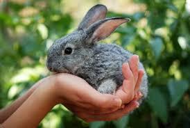 Risultati immagini per coniglio coccoloso
