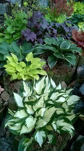 Texas Shade Garden Design Perfect Combinations Shade Garden Plants Shade Garden