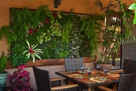 how to build a vertical garden. what is a vertical wall garden? how to build garden