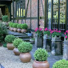Small Picture Plant Container Ideas Uk Container Gardening Ideas