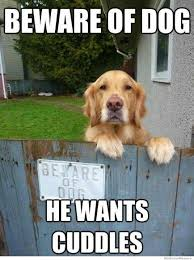 Beware of dog...He wants cuddles :) | Entirely Dog Memes ... via Relatably.com