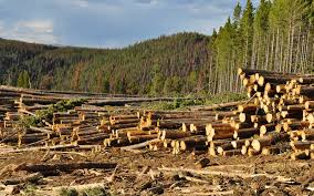 essay on deforestation in english for students words pdf