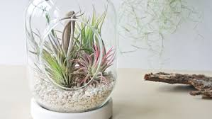 Air Plant Terrarium The Coral Garden Hanging Air Plant Terrarium Air Plant