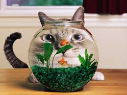 all wallpapers funny cats hd wallpapers 1600x1200