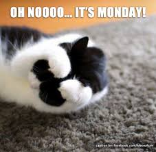 Image result for monday cat images