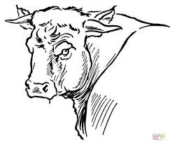 Small Picture Bull Portait coloring page Free Printable Coloring Pages