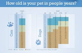 Dog Chart For Age Senior Pets Healthy Paws Animal Hospital