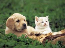 cute kittens and puppies together. Simple Cute Raising Kitten And Puppy Together Cute Baby Kittens Puppies On  For And Together P