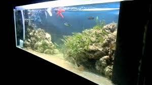 Acquario marino mediterraneo 400l 26 07 12 youtube