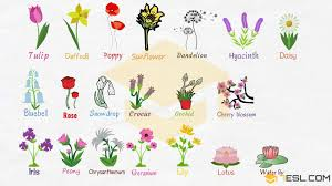 Flower Chart In English Flowers Names Useful List Of Flowers With Images 7 E S L