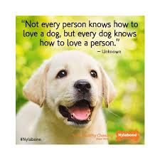 Pet Quotes Custom 48 Pet Quotes 48 QuotePrism
