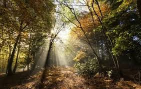 Limpsfield Chart Sunbeams Bursting Through Misty Autumnal Woodland